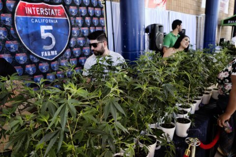 California pot taxes tick up but miss initial projections