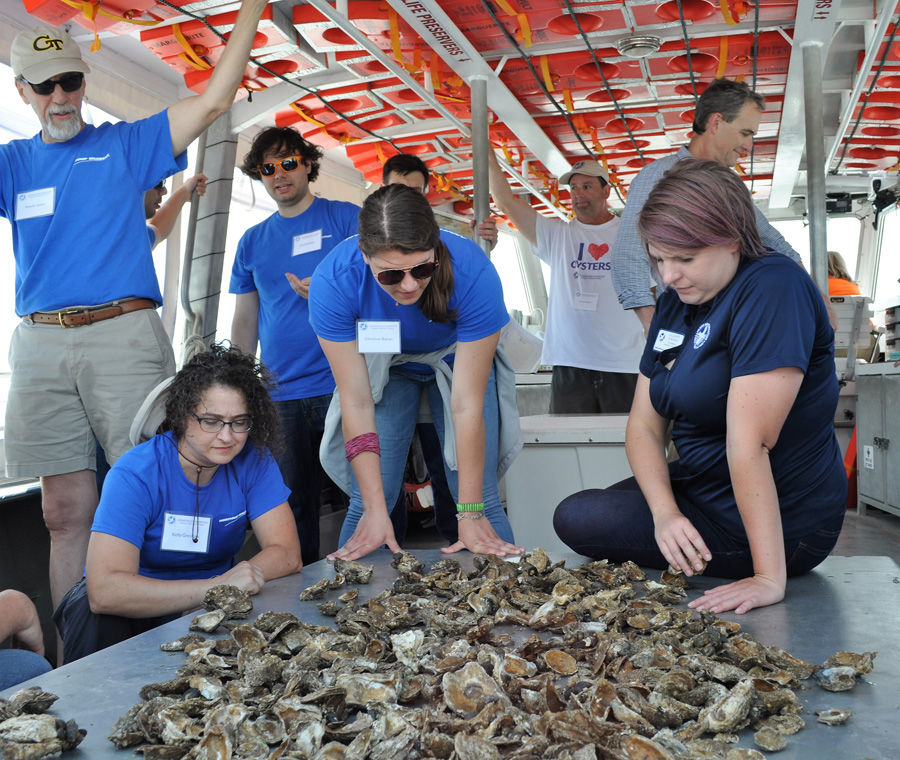 Researchers study oysters