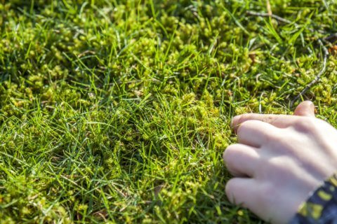 Garden Plot: What to do about moss and stinky compost