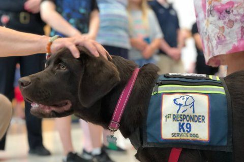 New police dogs take on unique job in Fairfax County