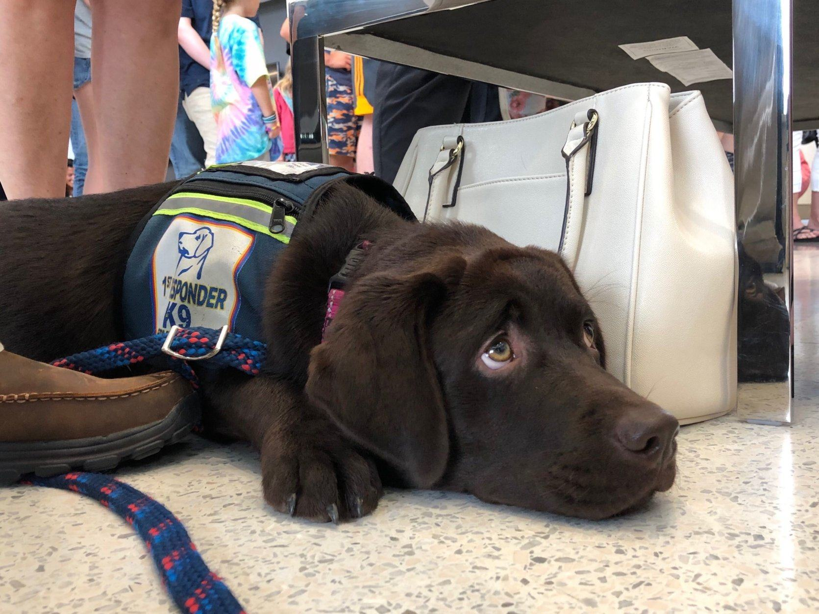 <p>The event Tuesday morning was provided so that the department could publicize the program, and so that members of the community could meet the dogs.</p>
