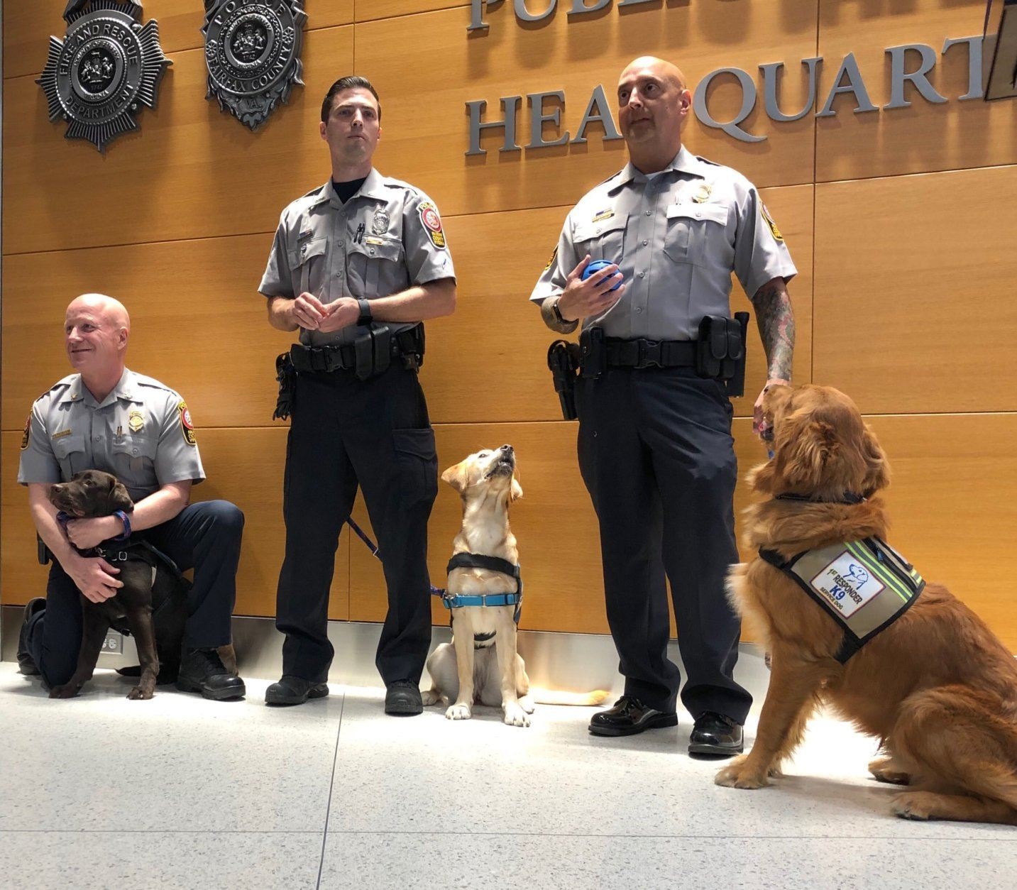 """<p>Among those taking on a dog for training is police Chief Ed Roessler. He stood as his dog, a chocolate Lab named Indy, sat at his feet.</p> <p>Roessler said Indy would eventually be placed with a disabled first responder.</p> <p>He explained some of the skills she'll have to master: """"How to go up and down an escalator, how to ride in an elevator, how to turn a light on and off, how to retrieve her leash.""""</p> <p>And, perhaps, the most important skill: how to provide comfort for someone suffering post-traumatic stress, Roessler said.</p> <p>""""She provides a lot of love and joy,"""" he added. """"She's just fun and gives love.""""</p>"""