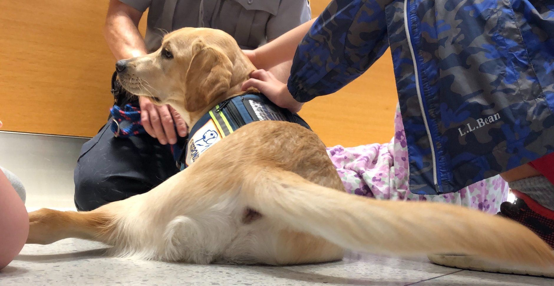 """<p>The dogs are also going to be available to members of the community on the scene of incidents as well, he added. """"Especially if we have a case that involves children, or people who are emotionally upset after a horrific event,"""" Carson said.</p>"""