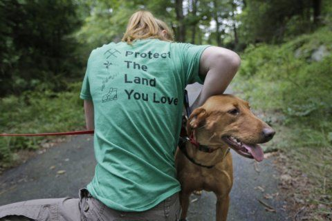 Wags and weeds: Invasive plants meet match in detection dogs