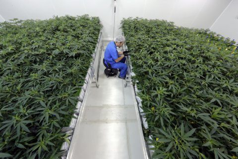 Grower: 5,000 in Louisiana medical marijuana program so far