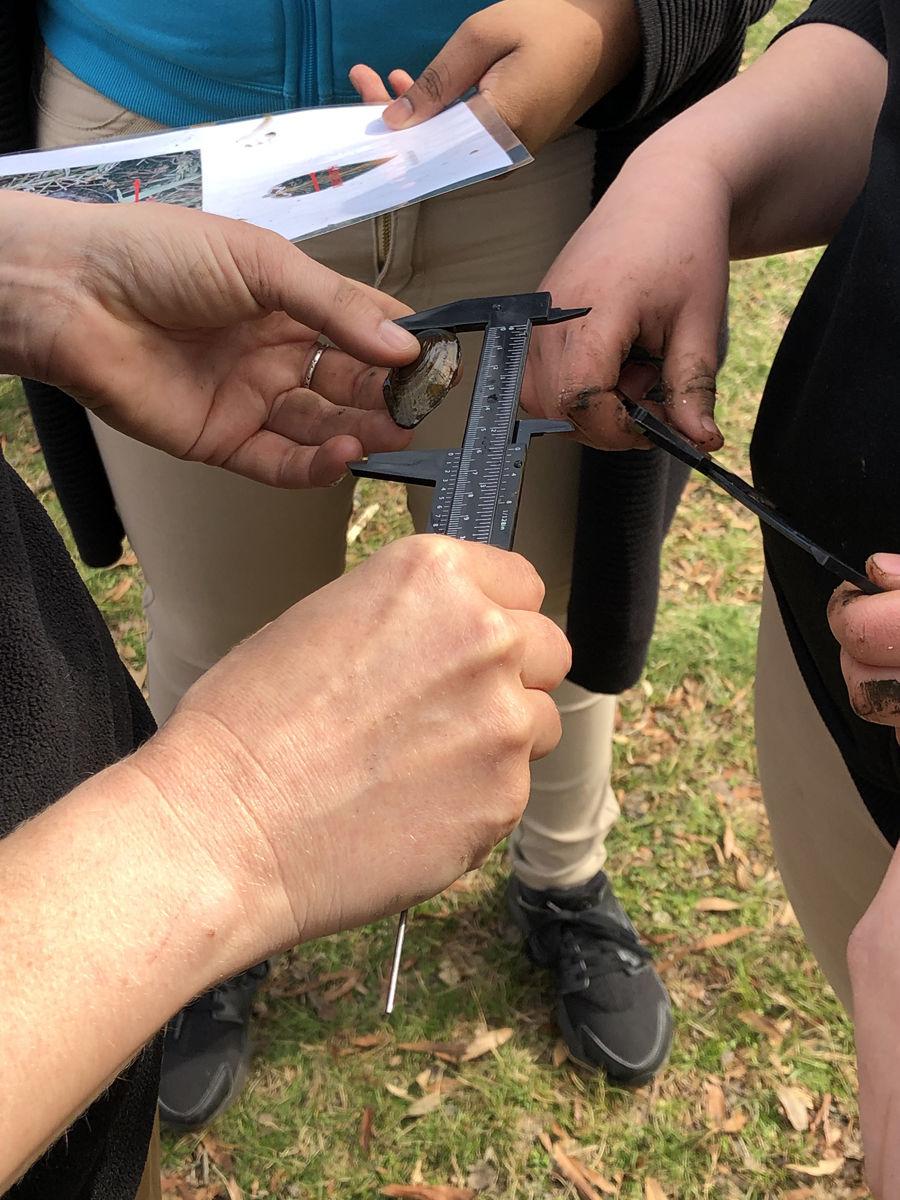 Students measure a mussel at Kenilworth Aquatic Gardens.