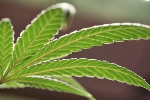 After years of waiting, medical marijuana sold in Louisiana