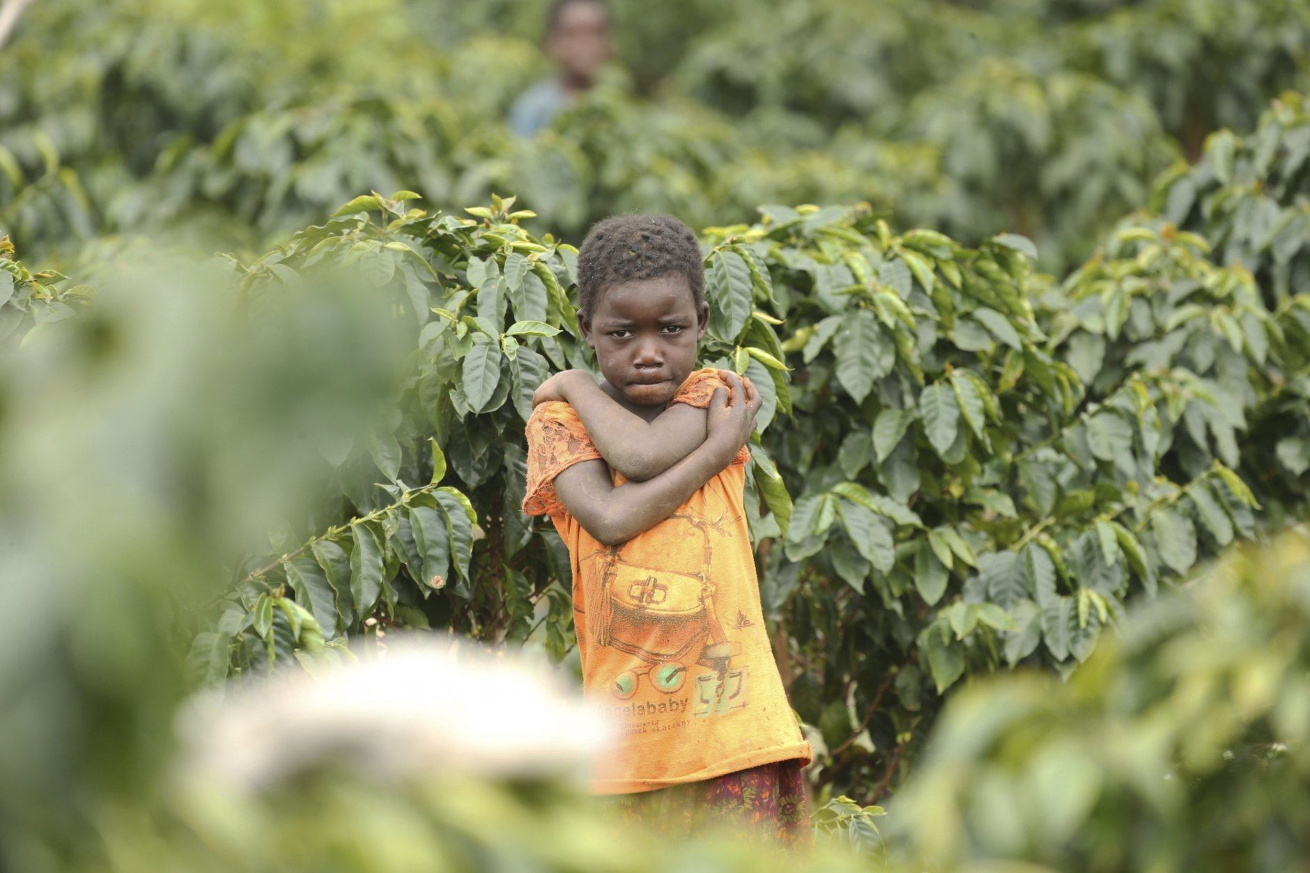 A child stands in a coffee plantation in Mount Gorongosa, Mozambique in this Sunday, Aug. 3, 2019 photo. On the slopes of Mount Gorongosa, more than 100 farmers are producing coffee that earns them incomes while at the same time restores the rapidly eroding rainforest. With peace on the mountaintop there are plans to dramatically scale up coffee production, as part of Gorongosa National Park's innovative plan to boost the incomes of people living around the park as well as revitalizing the environment. (AP Photo/Tsvangirayi Mukwazhi)