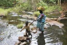 A mother helps her son cross a river while carrying coffee seedlings on her head at a coffee plantation in Mount Gorongosa, Mozambique Sunday, Aug. 3, 2019. On the slopes of Mount Gorongosa, more than 100 farmers are producing coffee that earns them incomes while at the same time restores the rapidly eroding rainforest. With peace on the mountaintop there are plans to dramatically scale up coffee production, as part of Gorongosa National Park's innovative plan to boost the incomes of people living around the park as well as revitalizing the environment. (AP Photo/Tsvangirayi Mukwazhi)