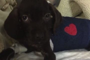 Puppy undergoes life-saving open heart surgery
