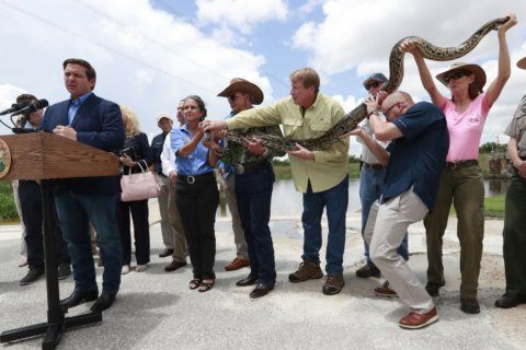 Florida doubles efforts to hunt invasive pythons