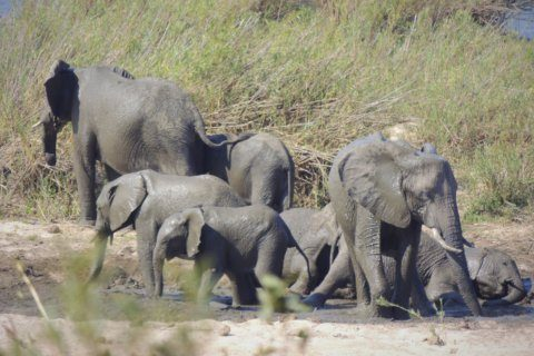 Countries agree to limit sales of elephants to zoos