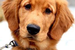 Holmes the dog