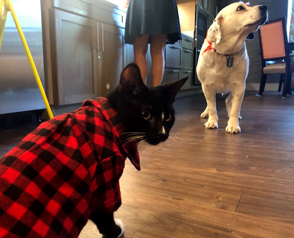 <p>It&#8217;s a match Creel said has made clear how much senior residents could benefit from this kind of companionship. She now hopes to place more older dogs in similar facilities to help save more lives. &#8220;I&#8217;m really hoping that we can do more of this in the future,&#8221; Creel said.</p>