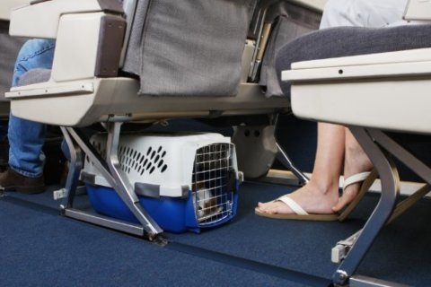 What pet owners needs to know about flying with their dogs