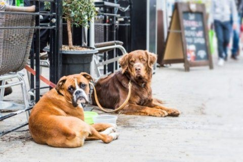 New York City hosts first dog restaurant week