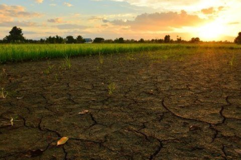 UN: 25% of Earth's ice-free land subject to 'human-induced degradation'