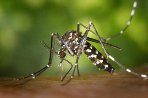 Garden Plot: Mosquito season is NOT over