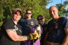 Volunteers and firefighters rescue an osprey