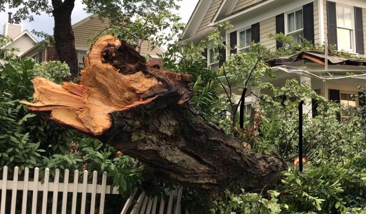 tree, storm