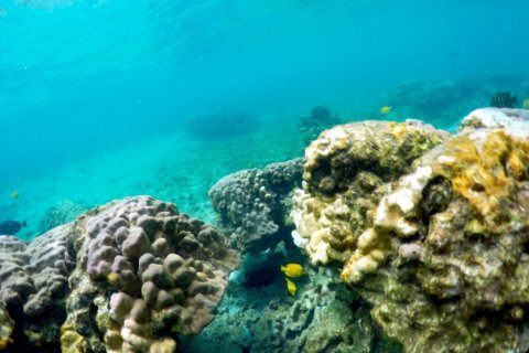 Ocean heat wave threatens severe damage to Hawaii coral