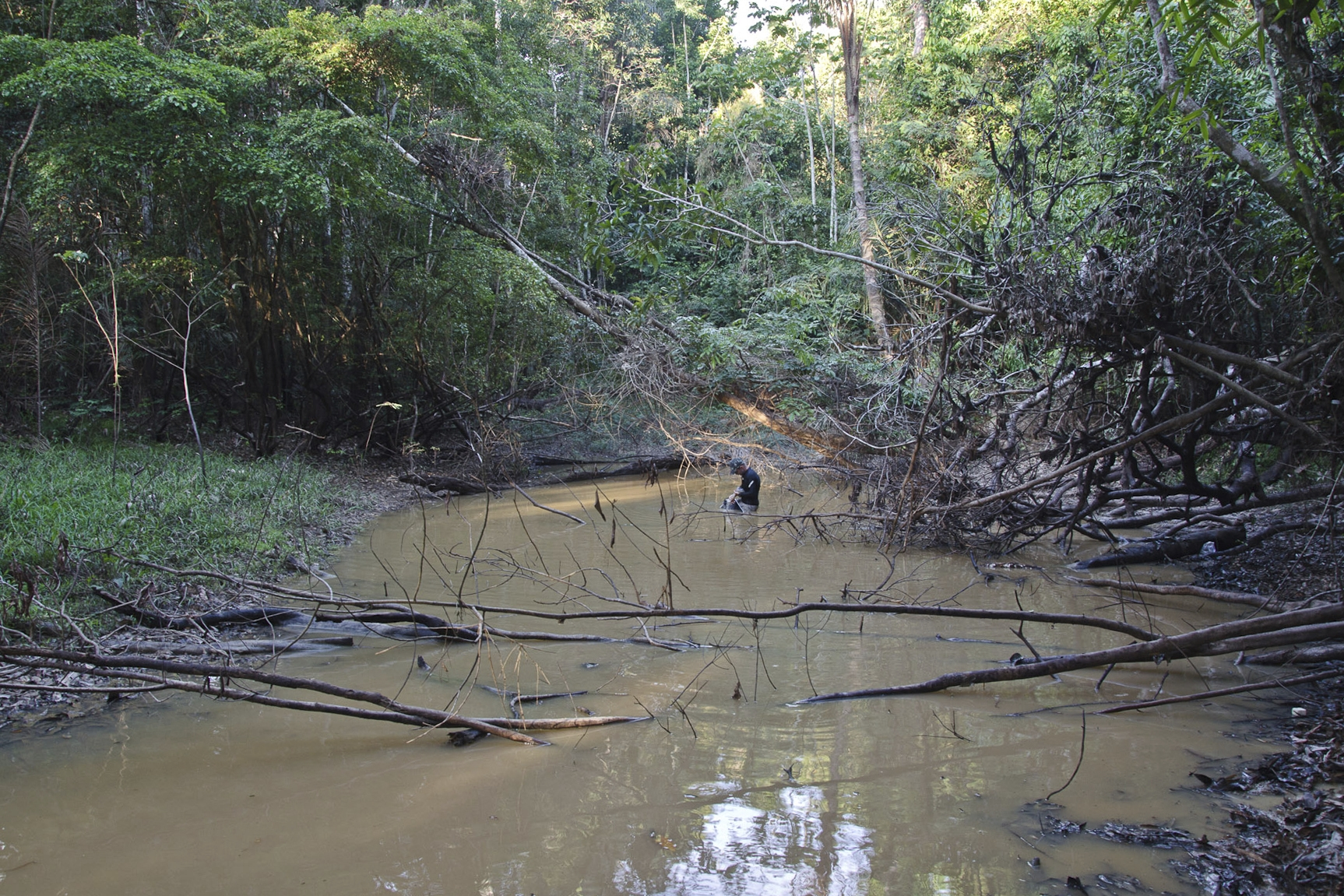 This undated photo provided by researchers in September 2019 shows typical electric eel lowland habitat in Brazil's Itaquai River. A newly discovered electric eel, Electrophorus varii, primarily lives in lowland regions of the Amazon. (D. Bastos via AP)