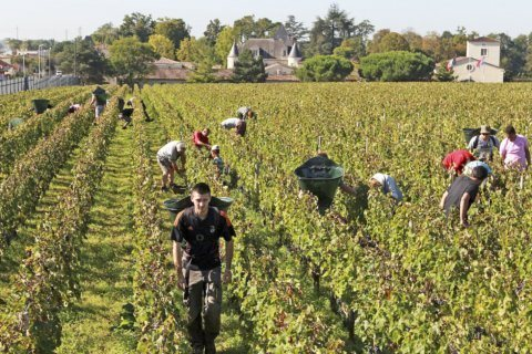 No-spray zones divide French farmers from anxious neighbors