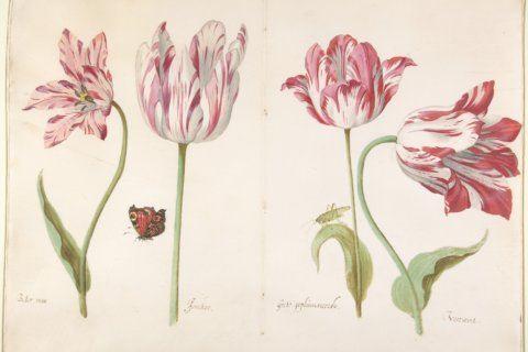 Botanical illustration: Putting a timely focus on nature