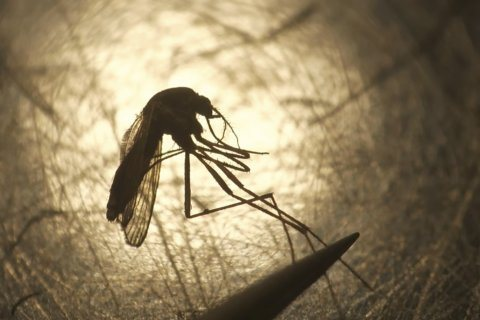 Uptick seen in rare mosquito-borne virus in some US states