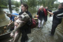 Jade McLain carries Thor out of a boat as she and Fred Stewart were rescued from their flooded neighborhood inundated by rains from Tropical Depression Imelda by Splendora Police officers on Thursday, Sept. 19, 2019, in Spendora, Texas. (Brett Coomer/Houston Chronicle via AP)