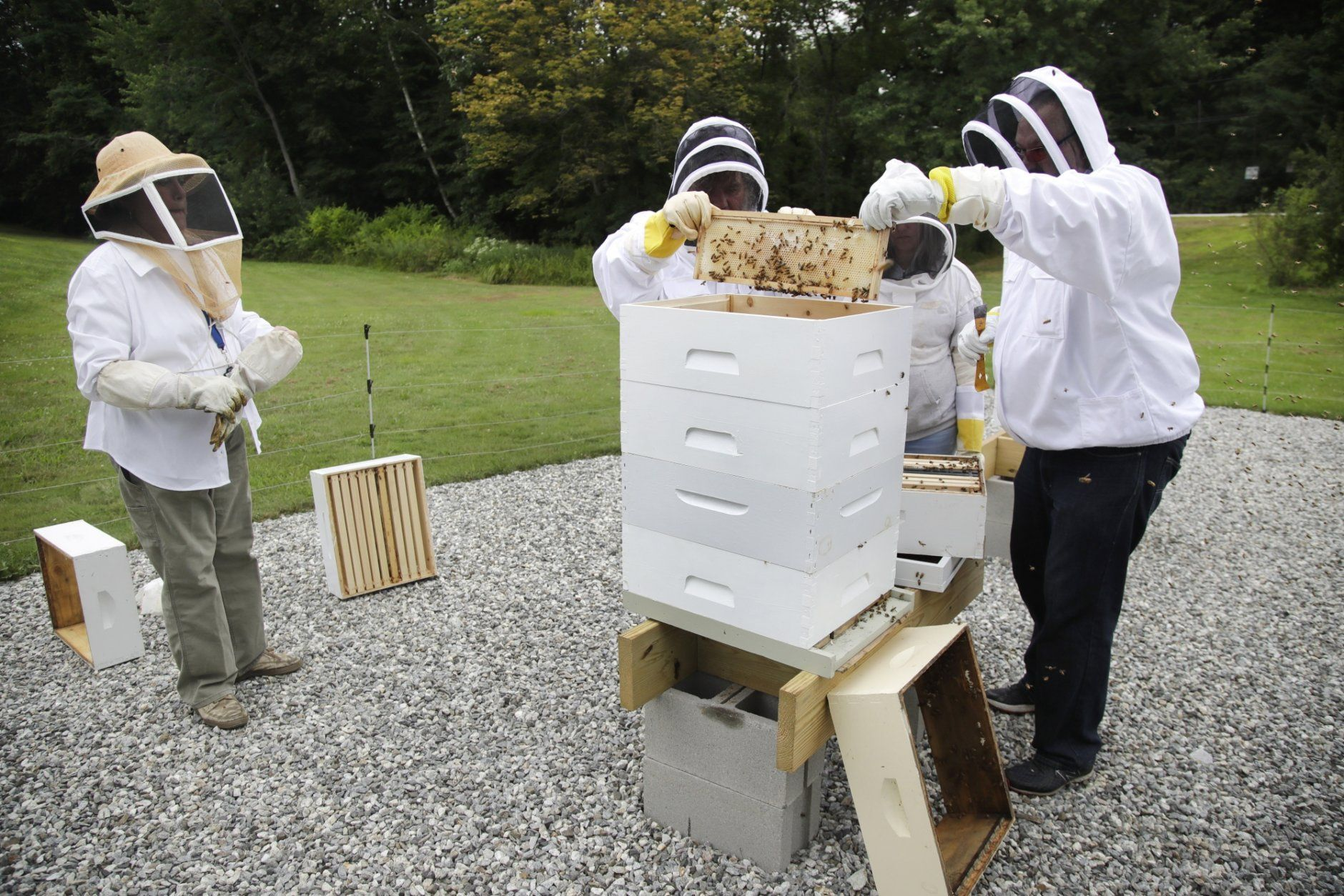 <p>In this Aug. 7, 2019 photo, instructor Karen Eaton, left, supervises beekeeping activities performed by veterans at the Veterans Affairs&#8217; beehives in Manchester, N.H. New Hampshire&#8217;s only veterans medical center is hoping its beekeeping program will help veterans deal with their trauma. A small but growing number of veterans around the country are turning to beekeeping as a potential treatment for anxiety, PTSD and other conditions. (AP Photo/Elise Amendola)</p>