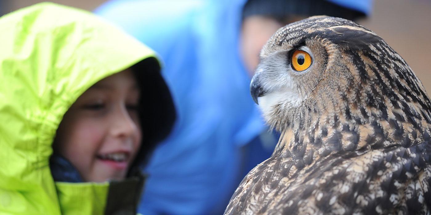 Birds Of Prey Featured At National Zoo Birds In Flight Show Wtop