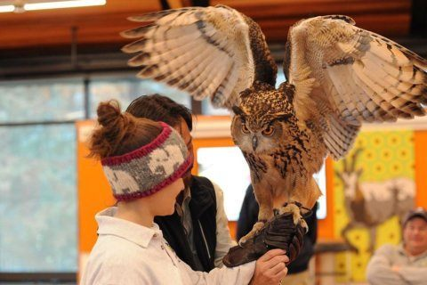Birds of prey featured at National Zoo 'Birds in Flight' show