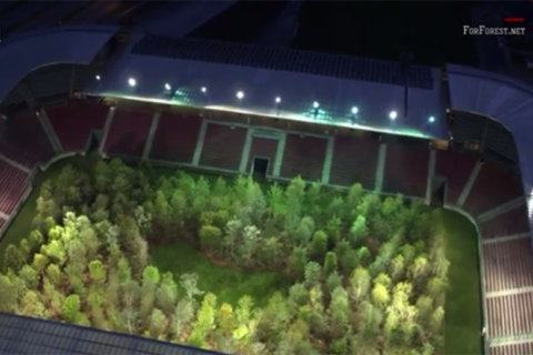 forest growing in stadium