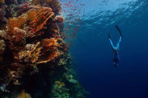 How one man with stage 4 cancer learned to free dive in Bali