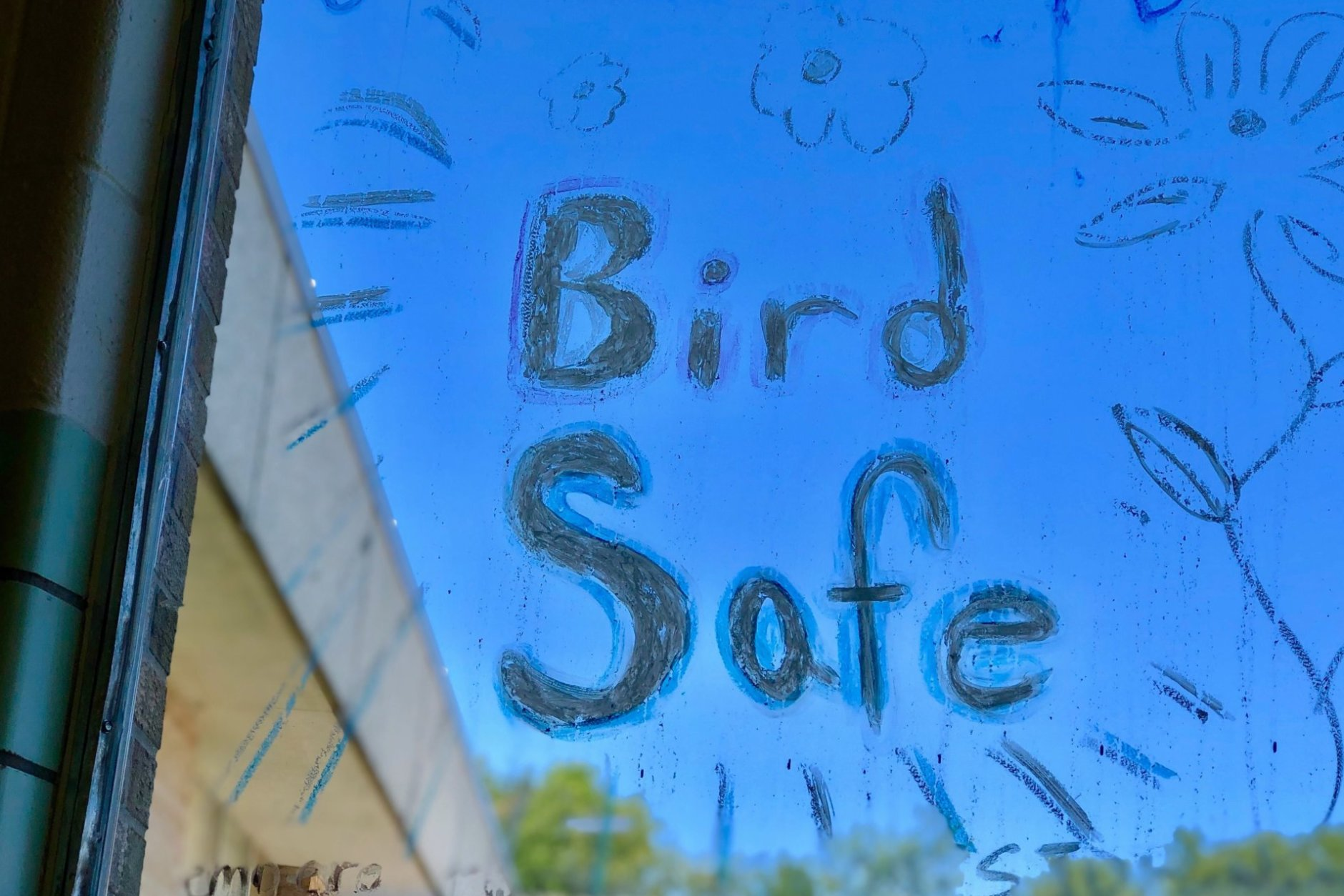 bird safe window