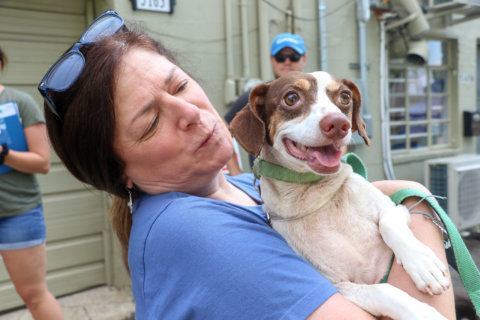 Arlington animal rescue group welcomes dogs from South Carolina affected by Dorian