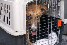 shelter, dogs, hurricane dorian