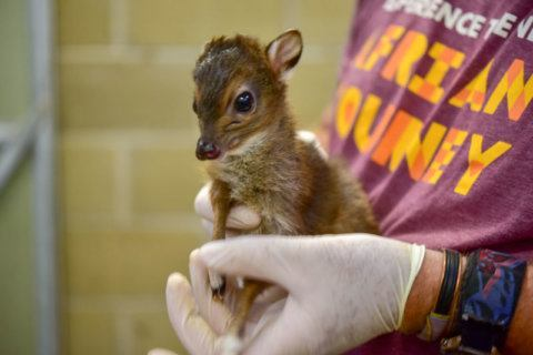 Meet Poppy: Maryland Zoo names its newest little cutie