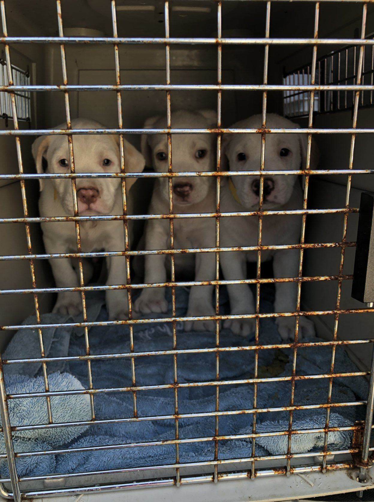 <p>Forty-two homeless cats and dogs from rural South Carolina arrived in D.C. Saturday, after being rescued from Hurricane Dorian.</p> <p>Lucky Dog, a foster-based rescue organization, sent 11 volunteers to Florence County, South Carolina, before the storm to help prepare a shelter and to rescue the animals.</p> <p>&#8220;We wanted to be there in case there was anything needed for the animals in that county, the county that Lucky Dog has been really committed to for the past seven years,&#8221; Lucky Dog founder and executive director Mirah Horowitz told WTOP, while she was in the rescue van on the way back to D.C.</p>
