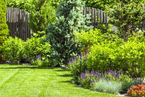 Garden Plot: Prime time to save money on new trees and shrubs