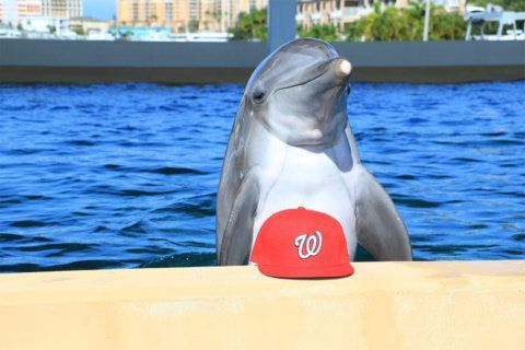Nicholas the Dolphin makes a World Series prediction