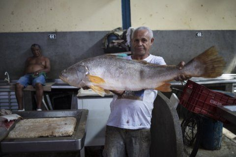 Samba, Amazon fruits and fish at Brazil's Ver-O-Peso market