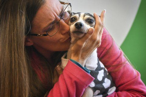 Dog lost since 2007 found over 1K miles away in Pittsburgh