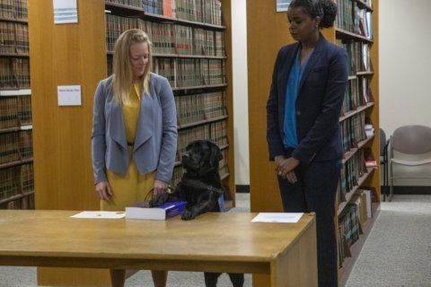 Labrador sworn in at state's attorney's office in Chicago