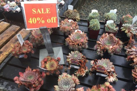 Fall's the best time to harvest discounts at garden centers