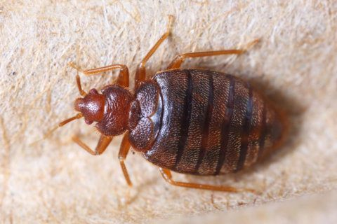 Bedbugs found in Prince George's middle school