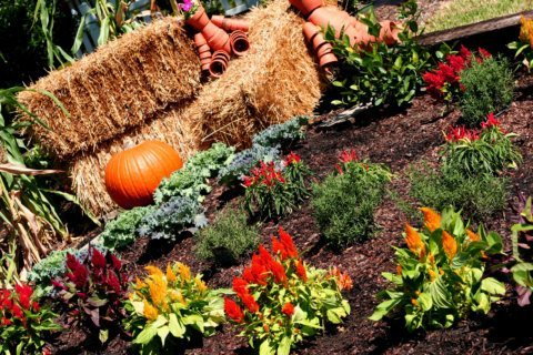 Garden Plot: How much watering does your lawn need in the fall?
