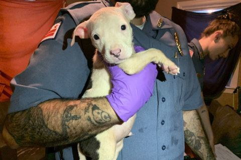 Neglected animals rescued from DC home; other abuse investigated