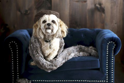 The latest in pet furniture: pieces that fit a home's decor